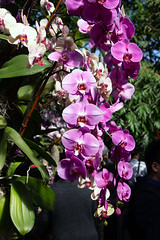 2019 Orchid Show-71