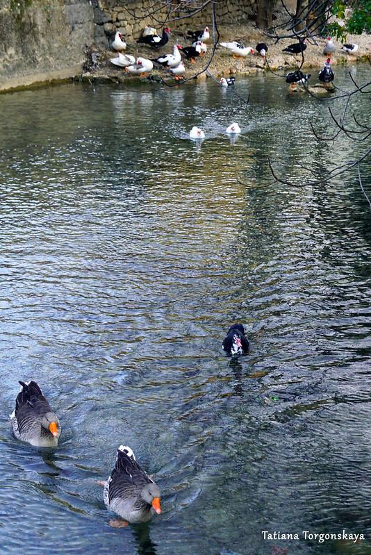Воды Брегавы неподалеку от Подградской мечети