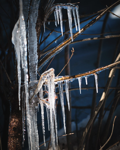 67/365 : When the light is right, icicles edition