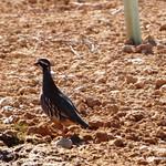 Fauna y paisaje en las lagunas de La Guardia (Toledo) 10-3-2019