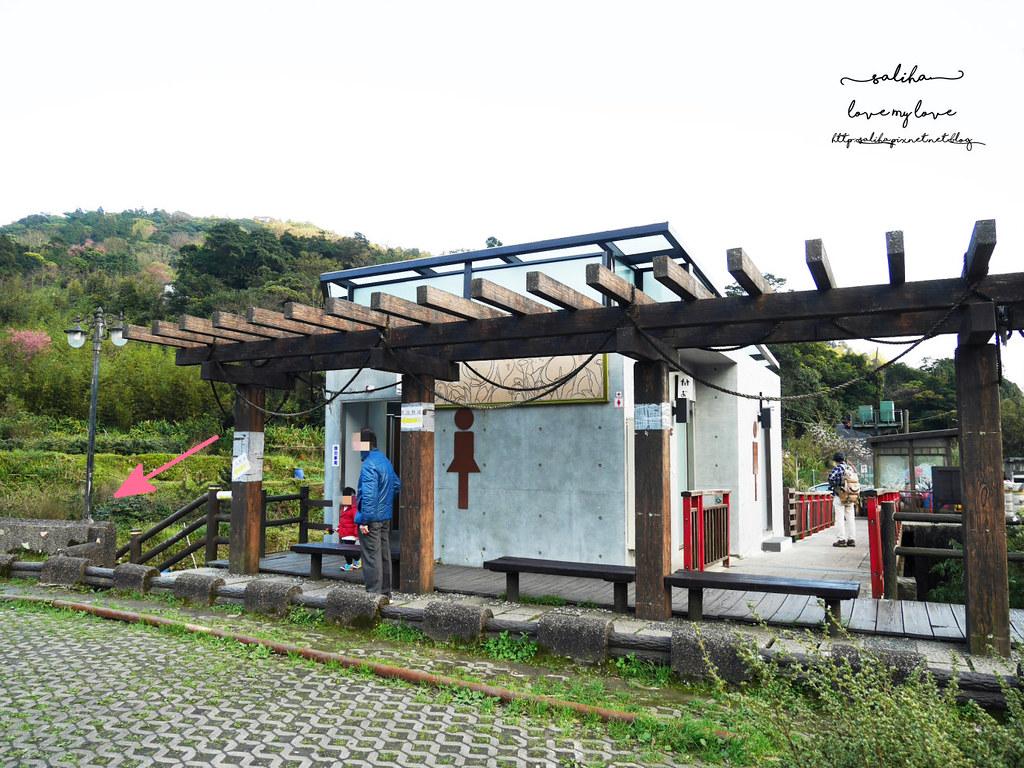 台北陽明山海芋季竹子湖交通怎麼去海芋大道 (1)