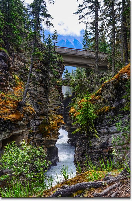 Athabasca Falls  (13)