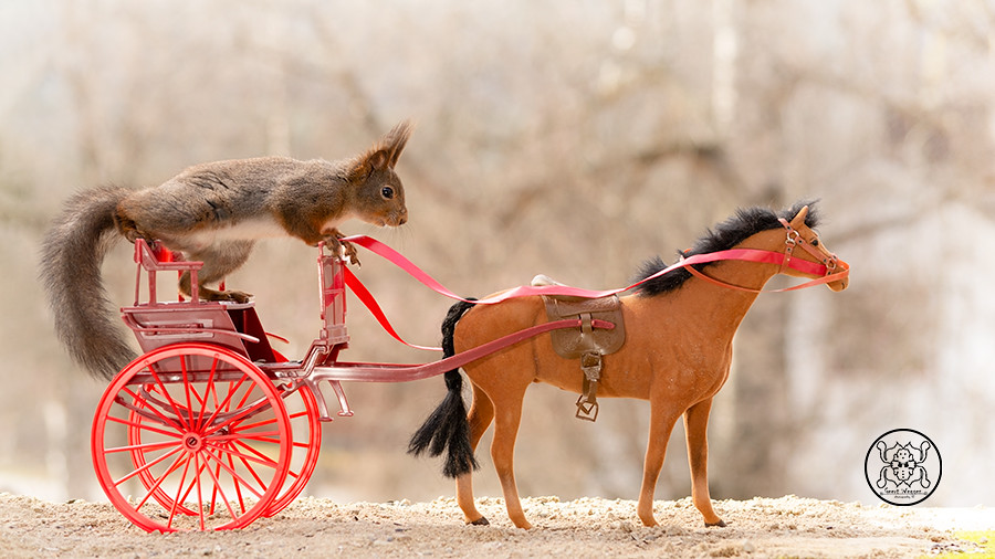red squirrel sitting on a carriage with a horse