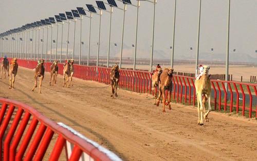 19th Kuwait International Camel Racing Championships