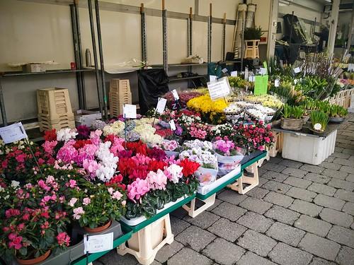 Puesto de flores en el mercado de Hasselt