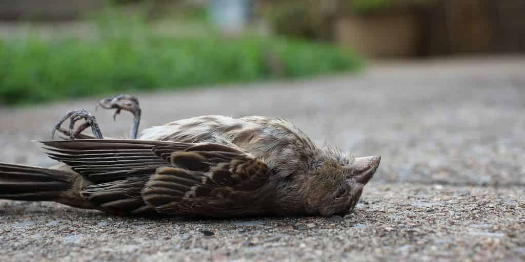 sms-mort-oiseaux