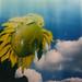 sunflower sutra part I'm still here