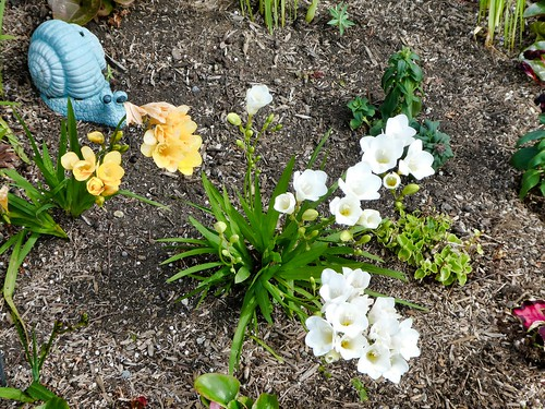 2019-04-01 - Landscape Photography - Garden - Flower Bed