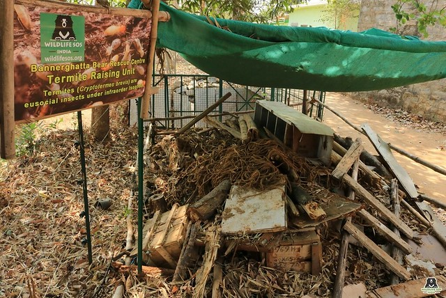 Termite Raising Unit at BBRC (2)