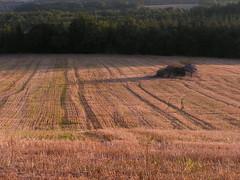 20080917 38459 1018 Jakobus Feld Wald - Photo of Sainte-Alauzie