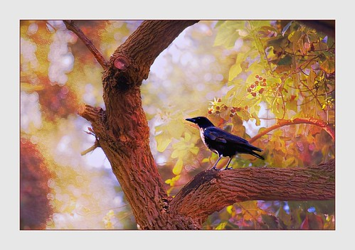 Crow in Tree At Sunset