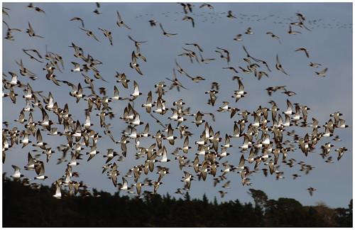 Mangere - The Lesser Known Bird Sanctuary