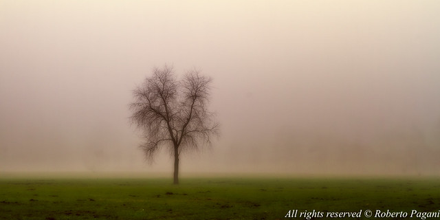 Alone in the fog