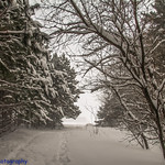February 12 2019 Snowstorm across Wisconsin. Between 9-16 inches fell across a large portion of the state. Crivitz, Wisconsin.