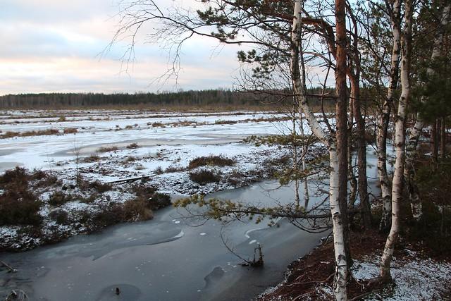 Freesturbaväli Viru rabas / Peat milling field in Viru bog, Estonia