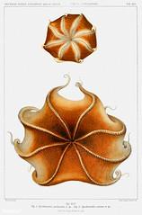 Red flapjack octopus vintage poster