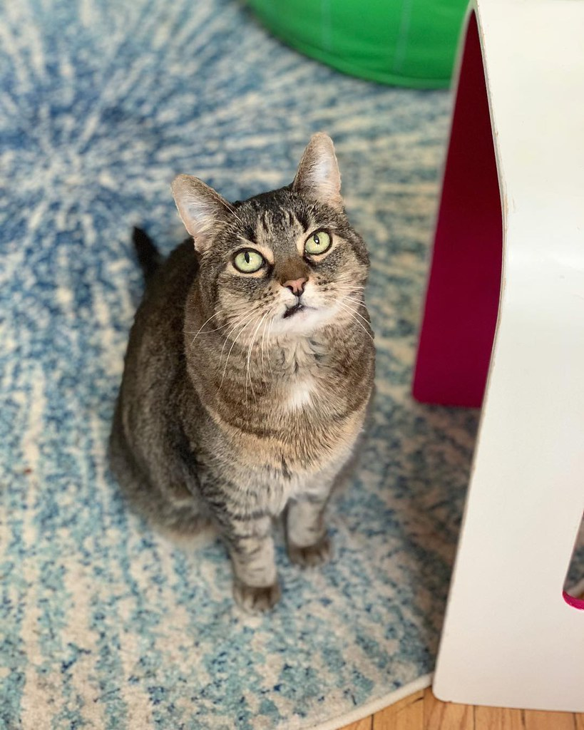 Olive, an indoor cat