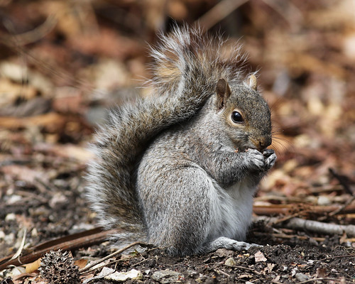 Highbridge Park squirrel