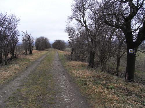 20110318 0205 181 Jakobus Weg Muschelsternzeichen Bäume