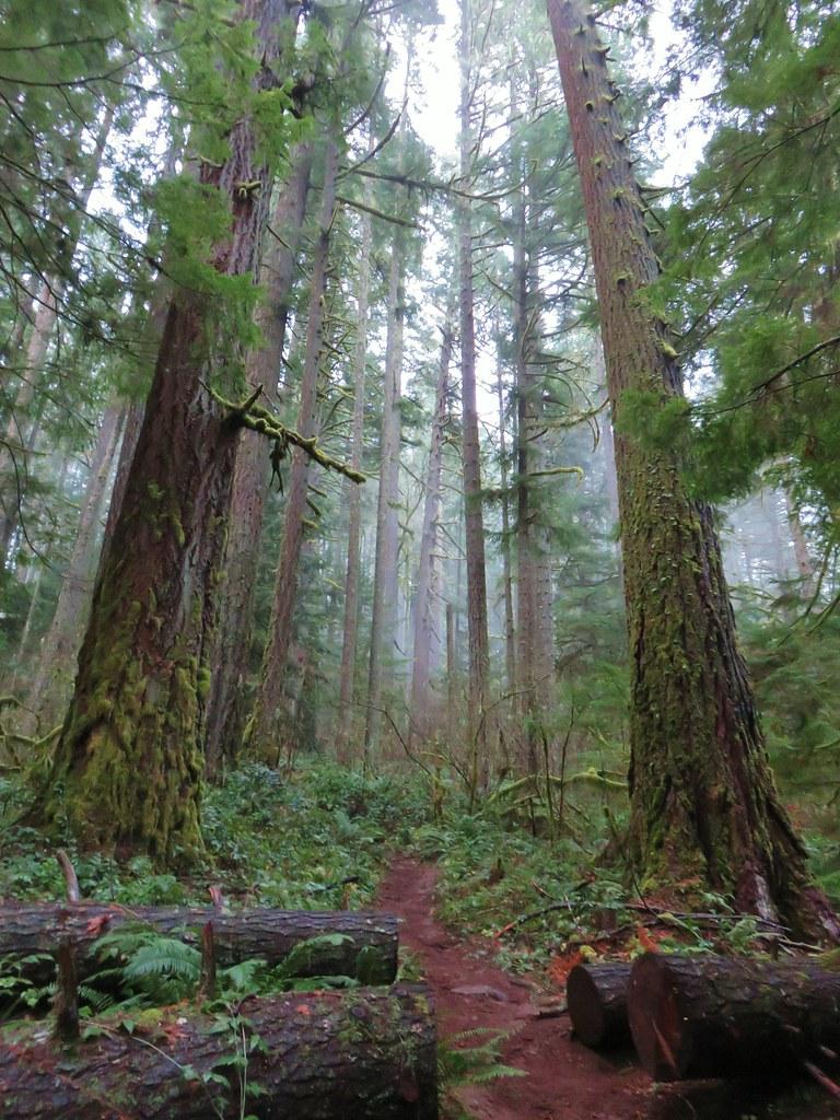 Hardesty Trail