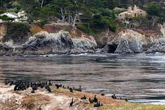 Bird Island and the Carmel Highlands