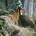 <p><a href=&quot;http://www.flickr.com/people/macspud/&quot;>Mac Spud</a> posted a photo:</p>&#xA;&#xA;<p><a href=&quot;http://www.flickr.com/photos/macspud/33253797358/&quot; title=&quot;London Zoo 15-2-19 - 6&quot;><img src=&quot;http://farm8.staticflickr.com/7827/33253797358_337802941d_m.jpg&quot; width=&quot;240&quot; height=&quot;160&quot; alt=&quot;London Zoo 15-2-19 - 6&quot; /></a></p>&#xA;&#xA;