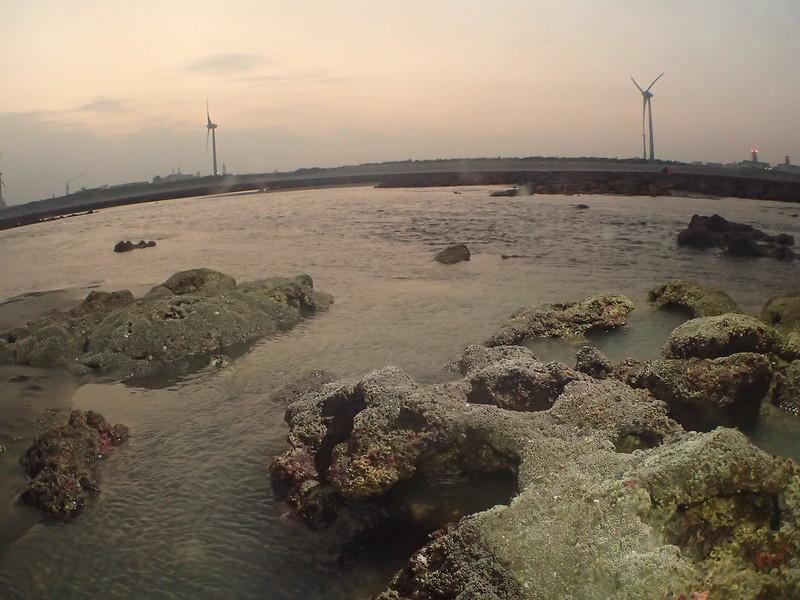 陳昭倫研究團隊在大潭藻礁的新發現──柴山多杯孔珊瑚群體。陳昭倫提供。