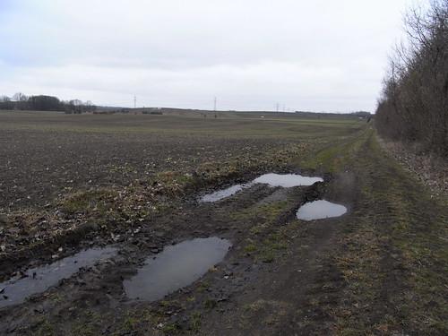 20110318 0205 221 Jakobus Weg Regenpfützen Büsche Feld