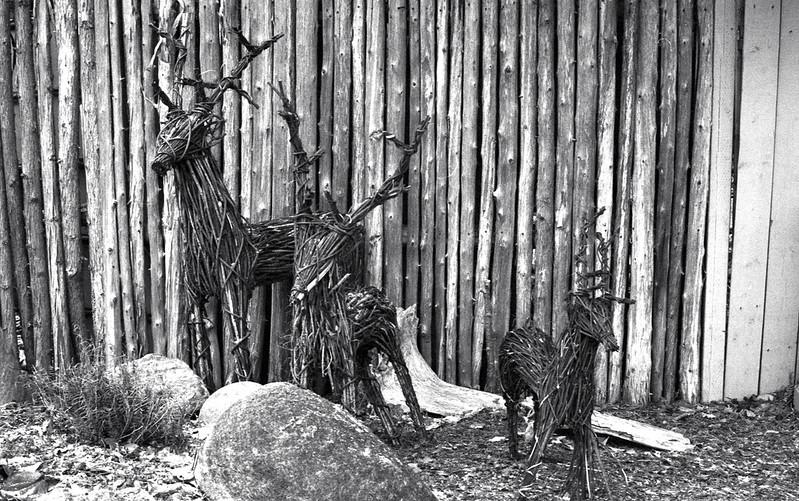 Branch herd