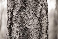 Bark #51
