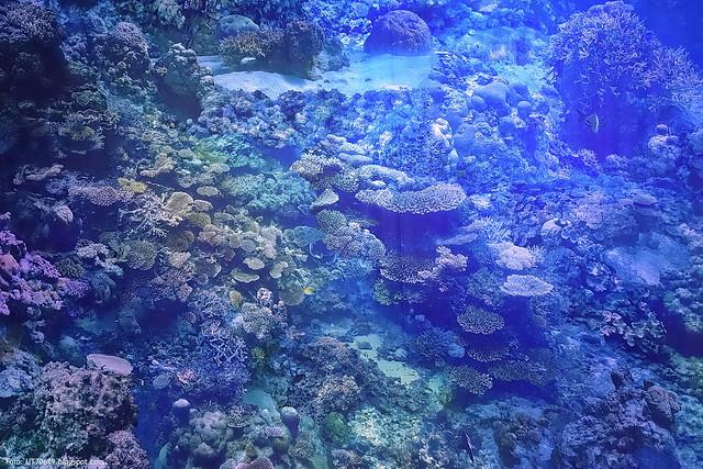 Great Barrier Reef Ausstellung