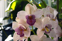 2019 Orchid Show-40