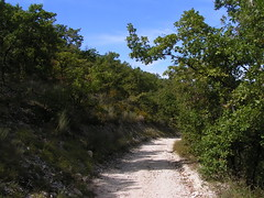 20080916 38219 1017 Jakobus Weg Bäume - Photo of Pern