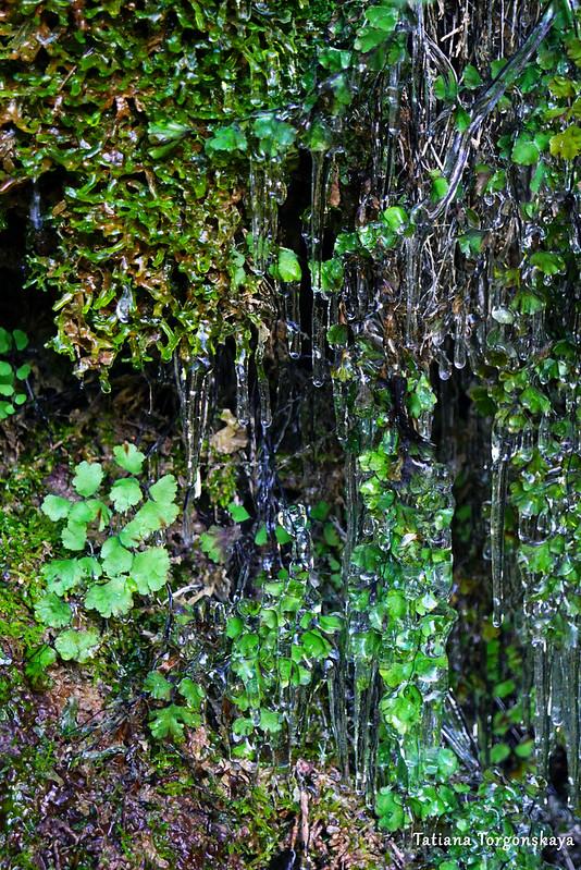 Растительность перед водопадом Провалие