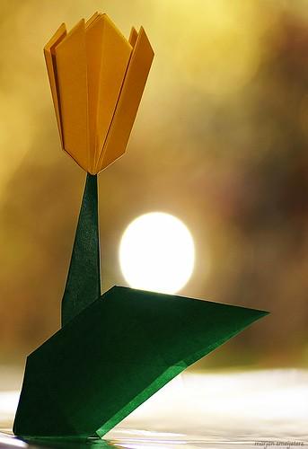 Origami Tulip (Yukohiko Matsuno)