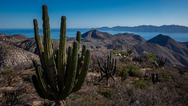View to Isla Cerralvo
