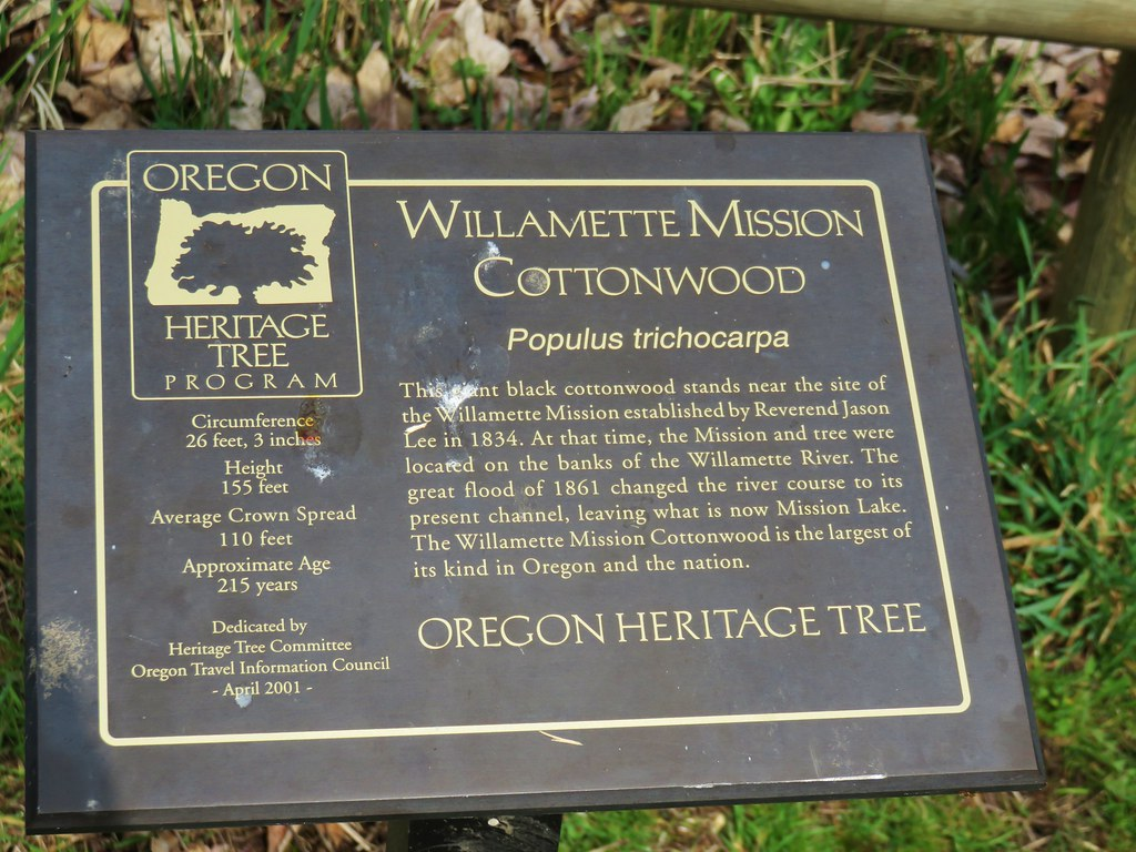 Interpretive sign for the Willamette Mission Cottonwood