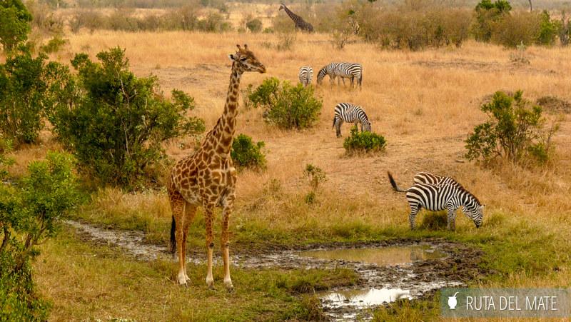 Guia para viajar a Kenia y Tanzania P1100609