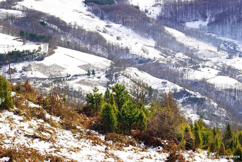 Деревья и заснеженные склоны