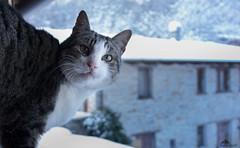 ❅ Good Morning Snow ❅