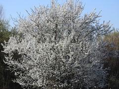 Primavera 2019 (Sesto Fiorentino)