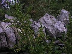 20080914 36761 1015 Jakobus Buchsbaum Steinmauer Platten - Photo of Espagnac-Sainte-Eulalie