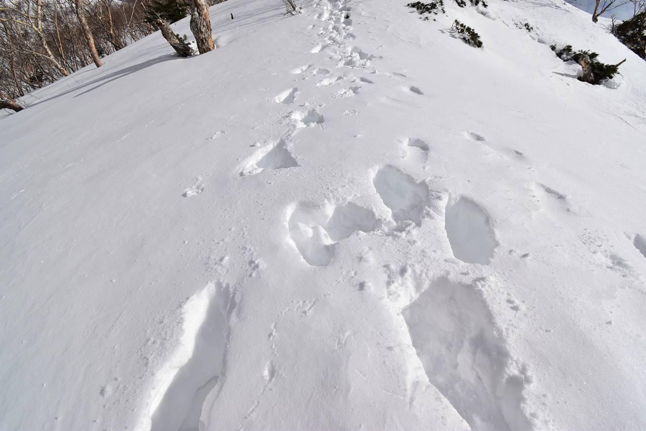 南アルプス烏帽子岳 ラッセル登山