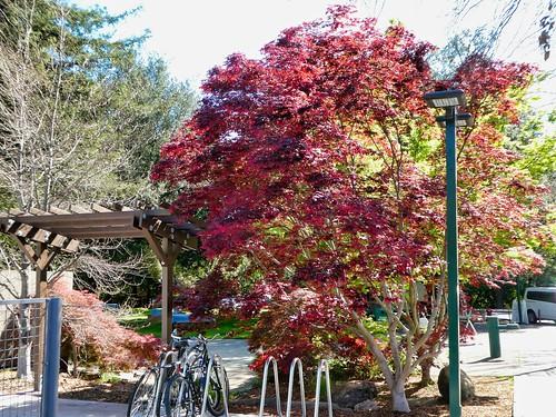 2019-04-13 - Outdoor Photography - Nature - Civic Park, Walnut Creek