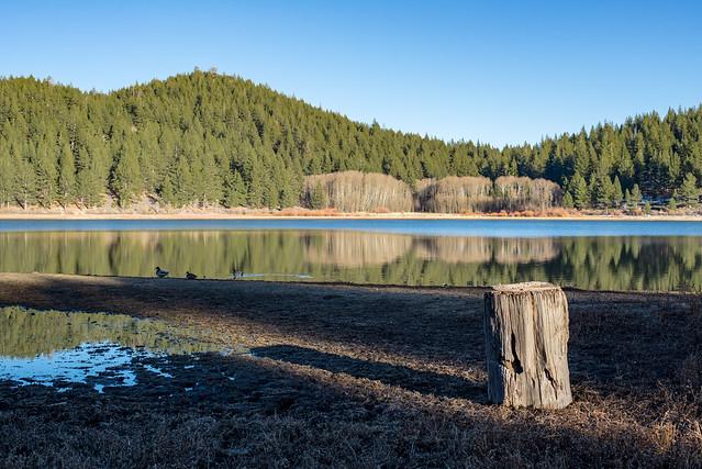 Spooner Lake Stump, Nikon D600, AF-S Nikkor 50mm f/1.8G