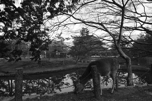 25-02-2019 Nara on morning (36)