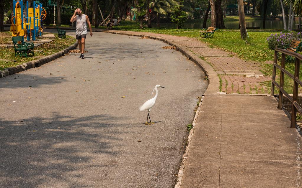 люмпини-парк-lumpini-park-bangkok-9251