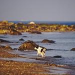 Dog Beach Fun - 5. Februar 2019 - Fehmarn - Schleswig-Holstein