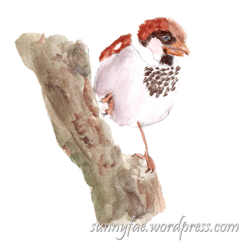 watercolour sketch of a sparrow on a tree trunk