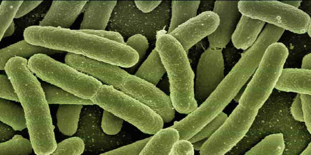 Une toxine des bactéries intestinales responsable du cancer de l'intestin